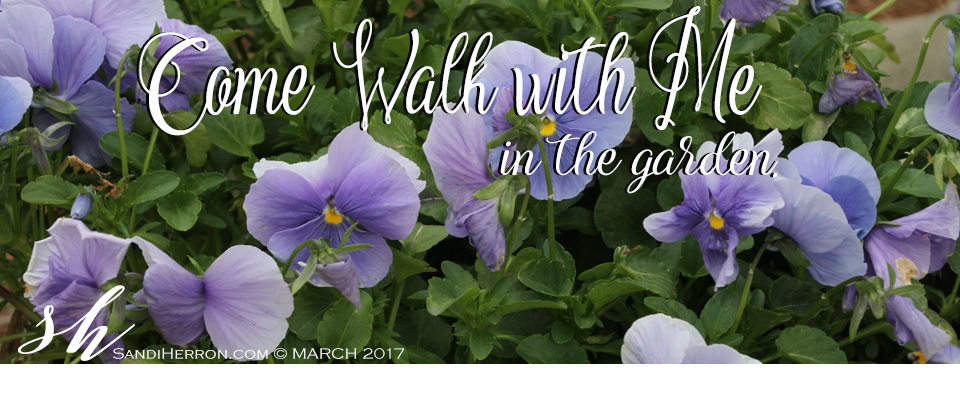 Come walk with me   Life at Spring Meadows
