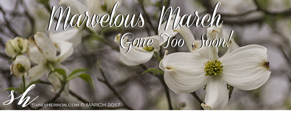 Marvelous March   Life at Spring Meadows   Gardening Living Creating