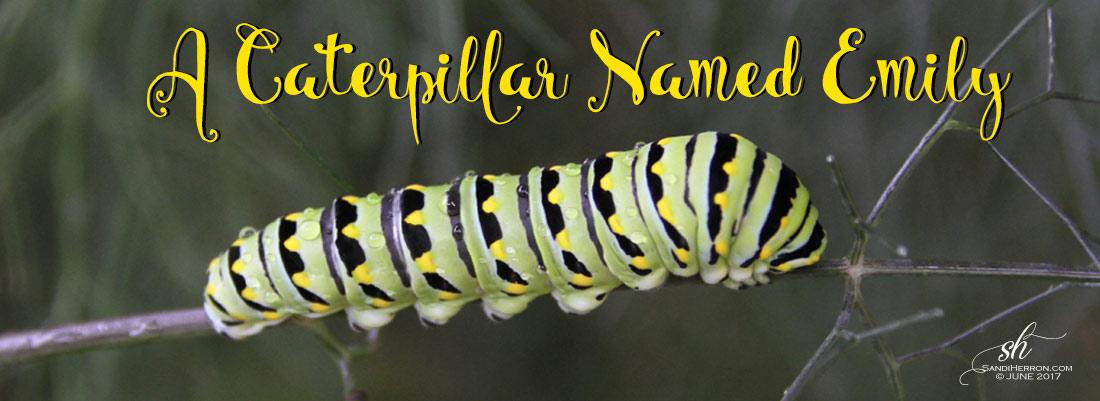A Caterpillar Named Emily | Life at Spring Meadows